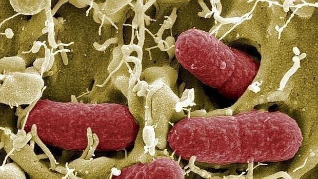 Los antibióticos en el embarazo aumentan el riesgo de enfermedad inflamatoria intestinal del bebé